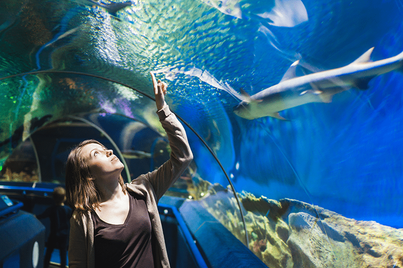 Young girl looking at fish at Ripley's Aquarium in Gatlinburg TN